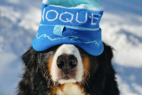 BERNESE MOUNTAIN DOG NOQUE TRAIL HAT _ Because Marquette Home Michigan Apparel Graphic Design Marketing IMG